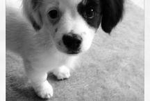 Puppies :) / by Allie Ovaitt