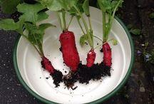 Oogsten / Overheerlijke groenten en fruit uit eigen tuin, wat wil je nog meer!?