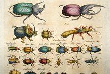 Merian & Jonston Natural History