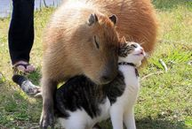 cat and capybara