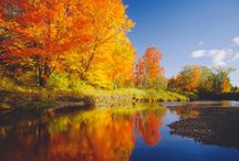 FALL SPLENDOR ! / by Doreen Micheals