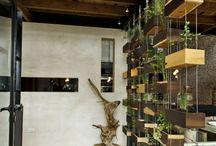 Restaurant divider plants