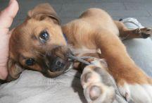 little doggies