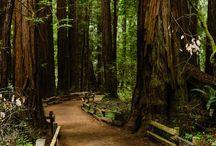 California travel / by Padma Krishnan