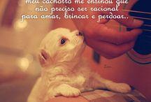 Animaizinhos + Frases