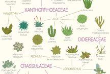 Plants :)