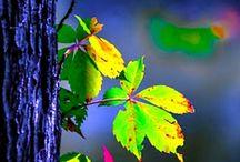 Folhas que caem, não caem por acaso...