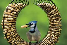 Bird feeders / by Parna Henry