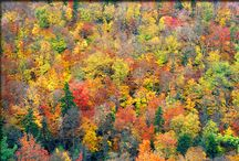 Travelling for Fall Colours