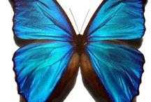 &butterfly