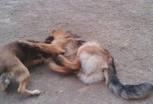 Danko / Dogs