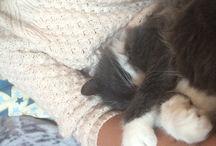 Cats / My cat pusen