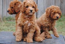 ADORABLE!!  puppies