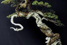 Bonzai trær