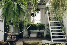 Houseplants Galore / Bring the garden inside with these inspirational houseplant ideas