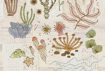 morze rysunki