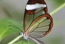 Butterflies / Butterflies / by L. L.