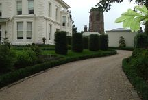 Topiary and clipped forms / Pleached trees, parasols, roof trained, box balls, cloud pruned, yew cylinders