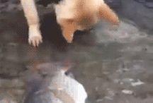 zwierzaki oooo
