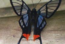 Butterflies / Бабочки