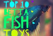 Pet Fish Ideas