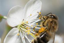 agricultura, abelhas e peixes