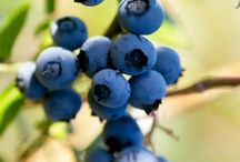 Grow Your Own / Growing fabulous fruit and veg in your garden