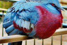 Kuşlar- The Birds