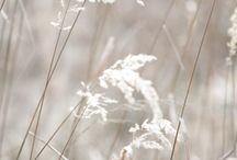 light  WHITE / by Sue Pate