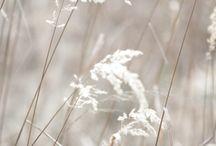 light  bright  W H I T E / by Sue Pate