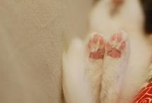 Kitties / Cat. Kitty. Kitties. Kittycats.  / by Molly Augustine