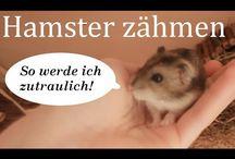 Hamster Tipps.......................