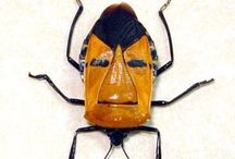 bugs !!
