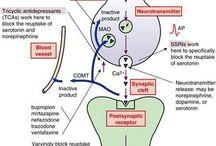 sinaps ve ilac etkileri