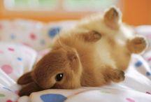Fuzzy creatures