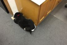 Shop Dog / Our facility is dog friendly! Our top four legged employee, Bella, is in charge of worker morale.