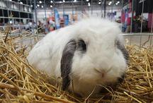 Elvis_bunnyy