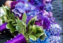 Purple! / by Jo Thumann