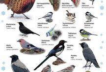 Linnut-kuvat