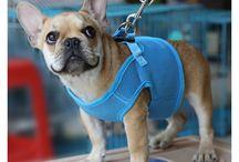 Dog harnesses (Szelki dla psa) / Produkty takie jak szelki dla psa powinny być wykonane z dbałością o szczegóły i z zastosowaniem mocnnych materiałów, tak by mogły służyć naszym dużym pupilom. Taśma powinna być bawełniana aby zabezpieczać psa przed odparzeniami, co ma duże znaczenie przy dużych. Products like dog braces should be made with attention to detail and using strong materials so that they can serve our large pets. The tape should be cotton to protect the dog against sore spots, which is important for large dogs.