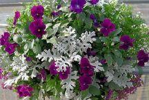 Citas puķes