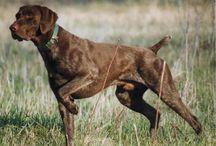 ρατσες σκυλων