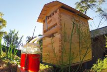 For Our Apiary / beekeeping in the country.  / by Erica B.