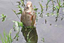 Рыбалка / Всё о рыбалке