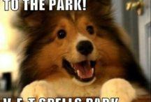 Funny Animal