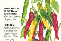 Botanical Interests - Chile Peppers