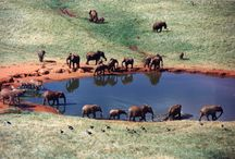 Tsavo West National Park / The park covers 9000 km2, approximately 30% of Kenya's area under parks, and contains a diversity of habitats, wildlife and a mountainous scenic landscape. The park has a beautiful landscape of plains, rocky ridges and outcrops. The park has a diversity of habitats including open plains alternating with savannah bush and semi desert scrub, rocky ridges and outcrops, and mountain forest on the Chulu Hills. A section of Lake Jipe is included in the extreme south west of the park.