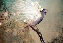 Pássaros :: Birds / by Alfredo Votta