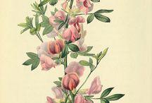 botanic / by LIBRA
