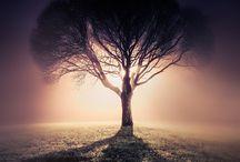 Tree Hugger / by Priya Ghose Photography Art
